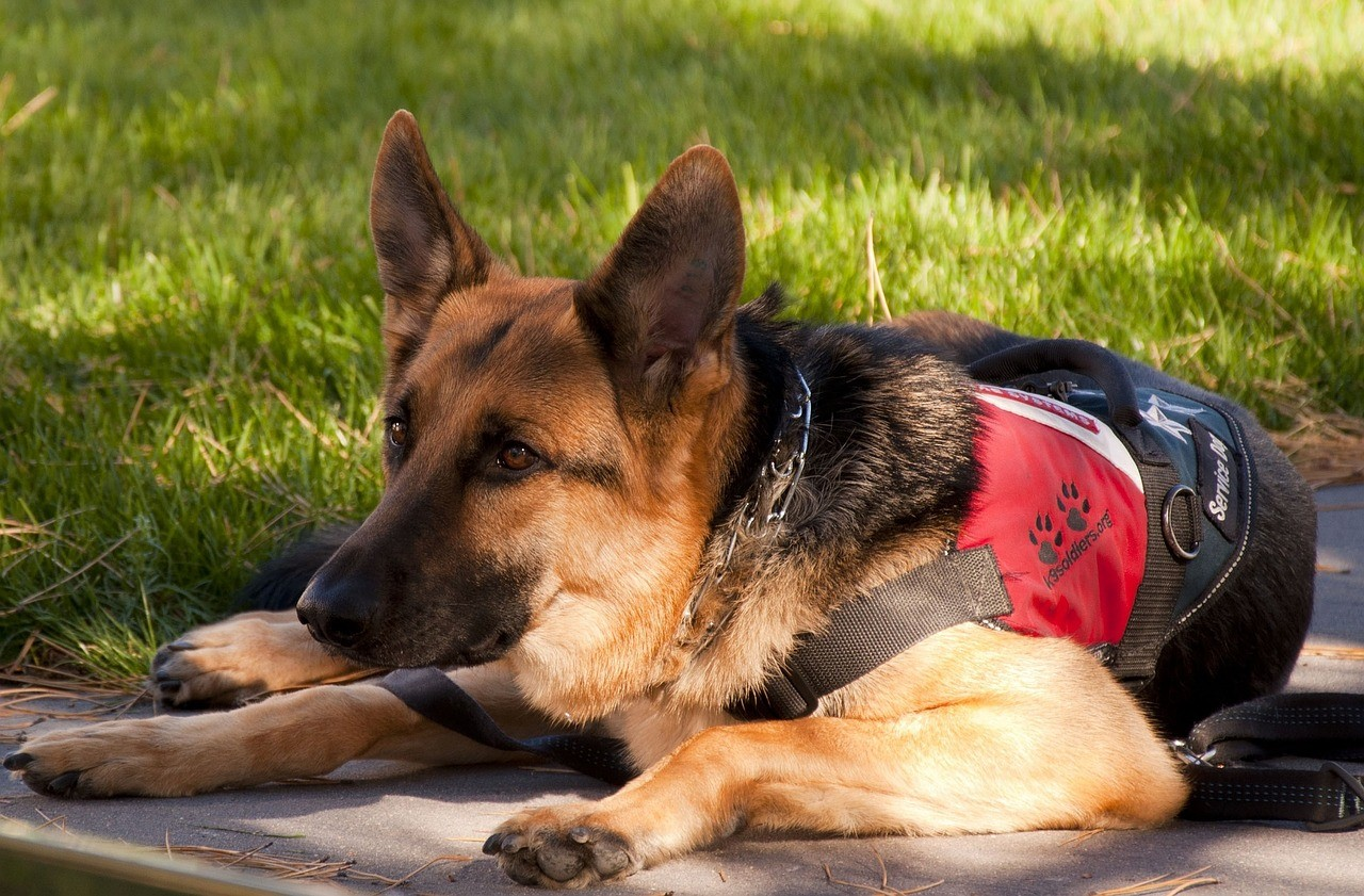 Things To Consider Before Getting An Autism Service Dog For Your Child